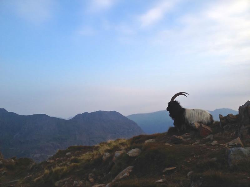 Climb Snowdon - About Yr Wyddfa